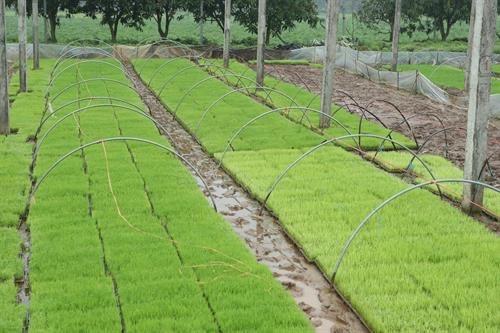 Huyện Thạch Thất- Hà Nội:Phát huy thế mạnh xây dựng nông thôn mới  - Ảnh 3