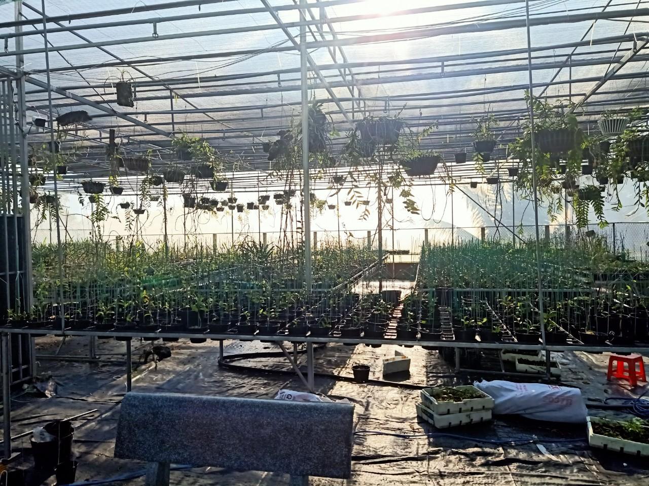 Bà chủ vườn lan Thu Thanh: Quyết tâm chinh phục loài lan kiêu kỳ - Ảnh 7