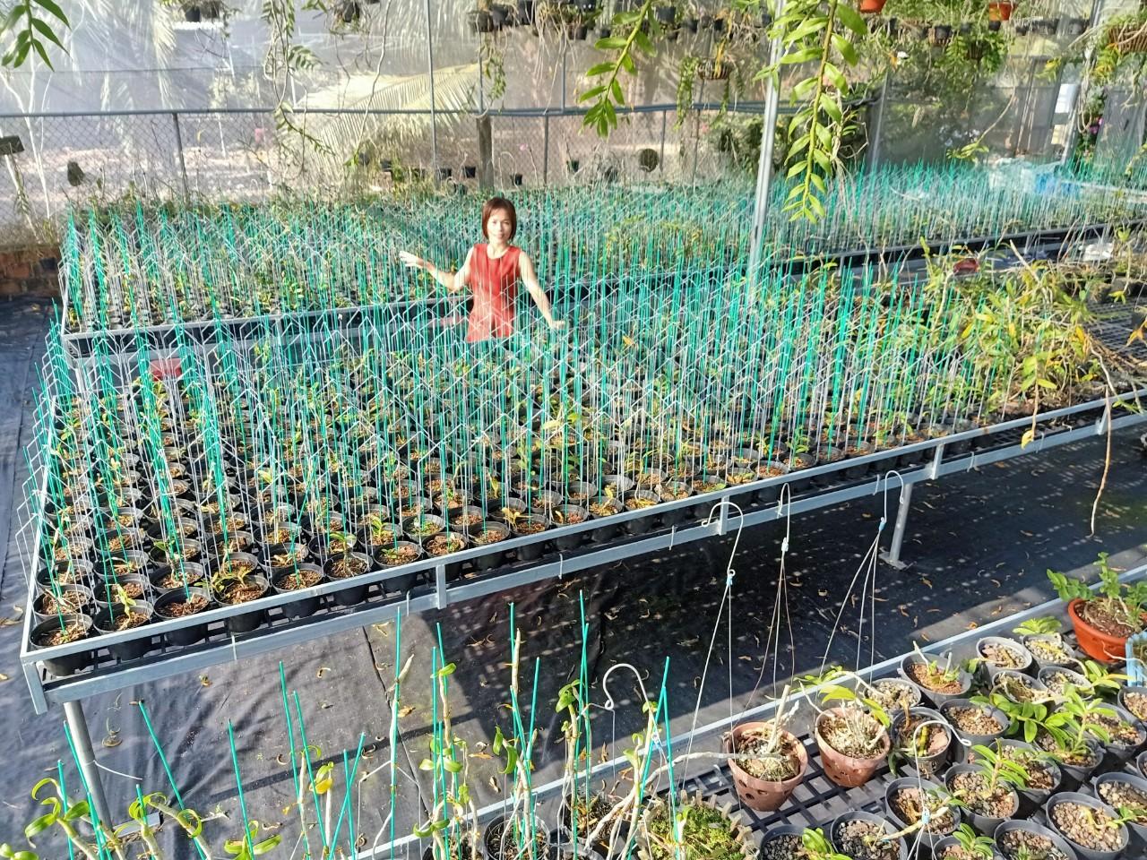 Bà chủ vườn lan Thu Thanh: Quyết tâm chinh phục loài lan kiêu kỳ - Ảnh 3