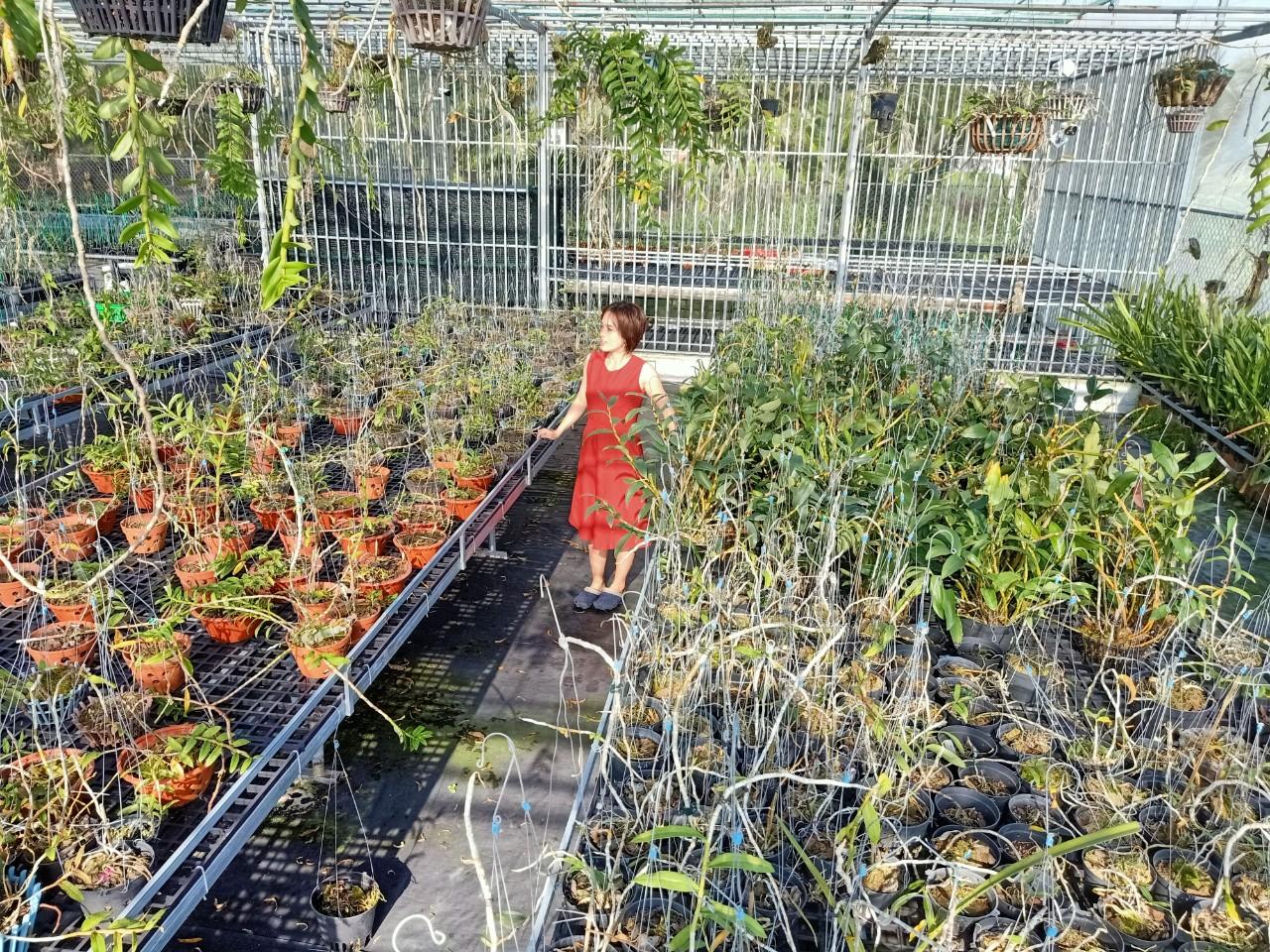 Bà chủ vườn lan Thu Thanh: Quyết tâm chinh phục loài lan kiêu kỳ - Ảnh 4