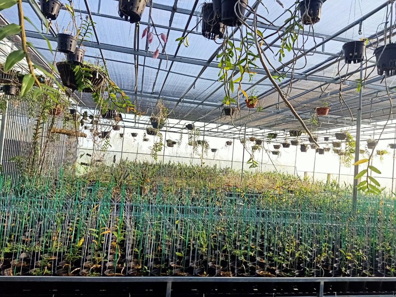 Bà chủ vườn lan Thu Thanh: Quyết tâm chinh phục loài lan kiêu kỳ - Ảnh 6