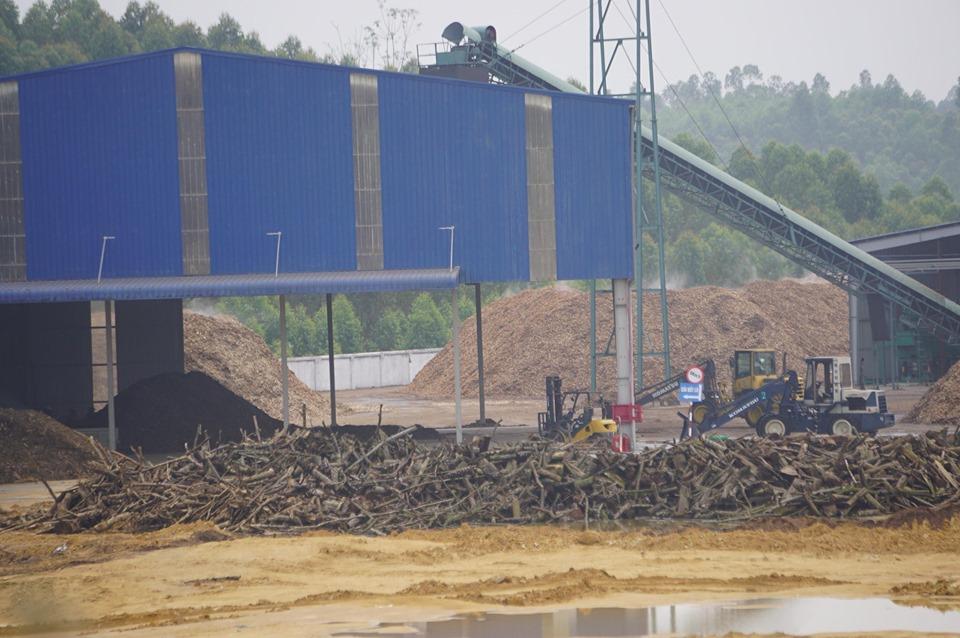 Người dân  'kêu trời' vì nhà máy chế biến gỗ gây ô nhiễm? - Ảnh 1