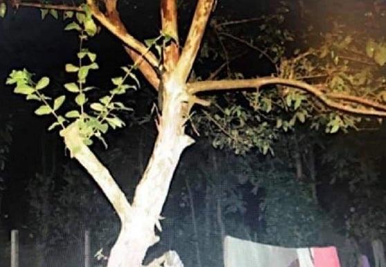 Tin tức thời sự mới nóng nhất hôm nay 19/11/2019: Người phụ nữ tử vong trong tử thế treo cổ trên cành ổi - Ảnh 1