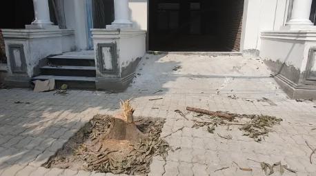 Công an vào cuộc điều tra vụ chặt trộm cây xanh trong đêm ở Hà Nội - Ảnh 1