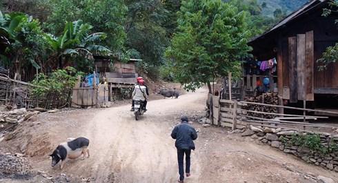 Phát hiện ổ dịch tả lợn châu Phi tại xã biên giới Nghệ An - Ảnh 1