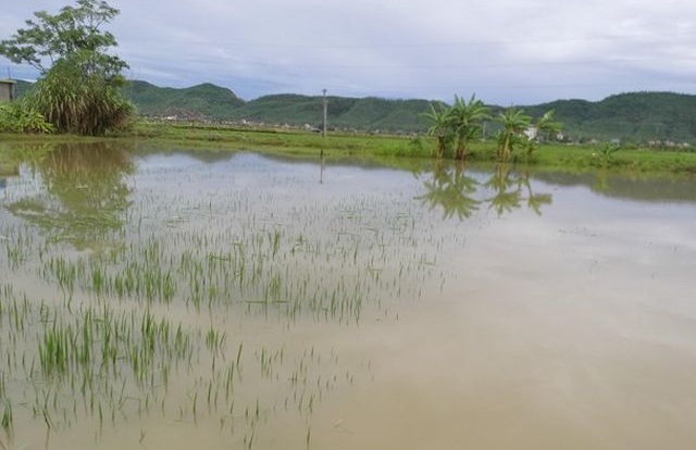 Nghệ An: Bé gái 2 tuổi ngã xuống ruộng lúa, tử vong thương tâm - Ảnh 1