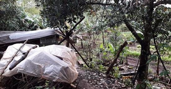 Gia Lai: Đi phát cỏ trúng dây điện trong vườn nhà, cụ ông 81 tuổi bị điện giật tử vong - Ảnh 1