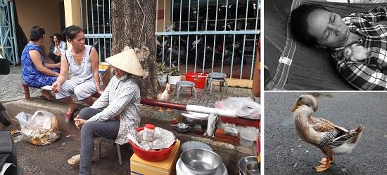 """Tình """"mẫu tử"""" kỳ lạ giữa người phụ nữ bán trái cây và chú vịt biết làm nũng - Ảnh 1"""