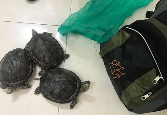 Đi ra đồng xả lũ, người đàn ông bắt được 3 con rùa quý hiếm - Ảnh 1