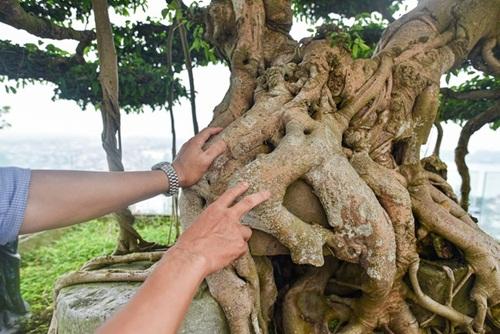 Chiêm ngưỡng cây sanh cổ trăm tuổi phong hóa cùng thời gian, trị giá ngang căn chung cư của đại gia Hà Nội - Ảnh 2