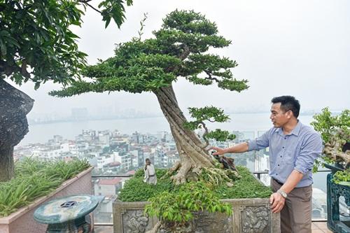 Chiêm ngưỡng cây sanh cổ trăm tuổi phong hóa cùng thời gian, trị giá ngang căn chung cư của đại gia Hà Nội - Ảnh 8