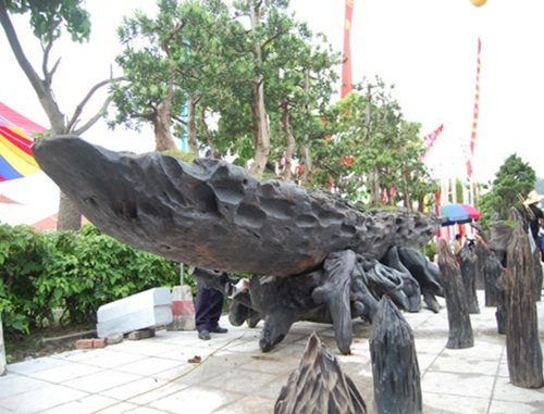 """Siêu cây """"Chiến thắng Bạch Đằng"""" được định giá 3 triệu đô của đại gia Hải Phòng khiến nhiều người choáng váng - Ảnh 2"""