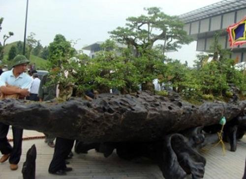 """Siêu cây """"Chiến thắng Bạch Đằng"""" được định giá 3 triệu đô của đại gia Hải Phòng khiến nhiều người choáng váng - Ảnh 5"""
