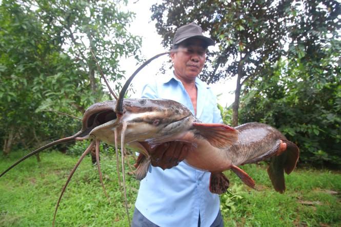 """Tin tức thời sự mới nóng nhất hôm nay 2/10/2020: Lão nông bắt được cá trê """"khủng"""" hơn 1 mét, có 8 sợi râu dài gần 20 cm - Ảnh 1"""