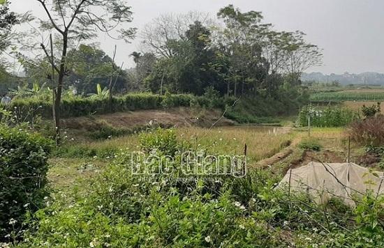 Bắc Giang: Phát hiện đôi nam nữ tử vong bất thường trong lều cá giữa cánh đồng - Ảnh 1