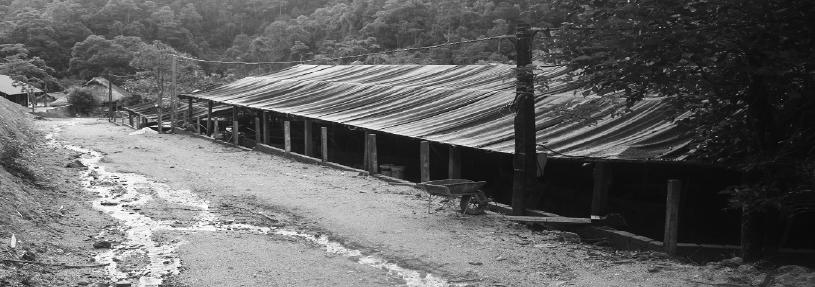 Thu tiền tỷ từ dòng suối nước lạnh dưới chân núi Pù Rinh - Ảnh 2