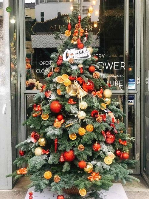 Chưa đến giáng sinh, cây thông ngoại đã gây sốt thị trường, đắt như vàng nhiều người vẫn tranh nhau mua - Ảnh 1