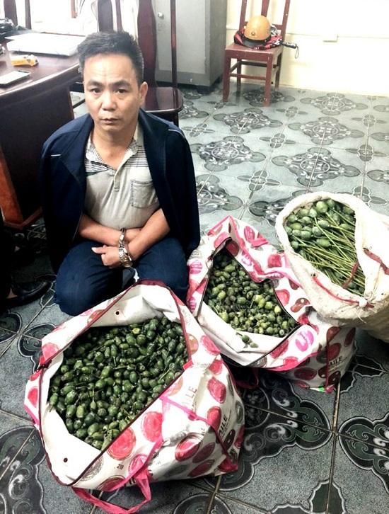Thanh Hóa: Khởi tố người đàn ông vận chuyển hơn 50kg quả thuốc phiện tươi đi bán kiếm lời - Ảnh 1