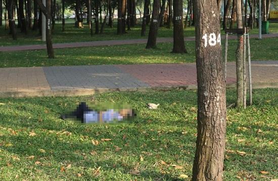 TP.HCM: Phát hiện thi thể người đàn ông trong công viên - Ảnh 1
