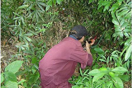 Bình Định: Đi săn thú rừng, người đàn ông chết thảm bên cạnh khẩu súng độ chế - Ảnh 1