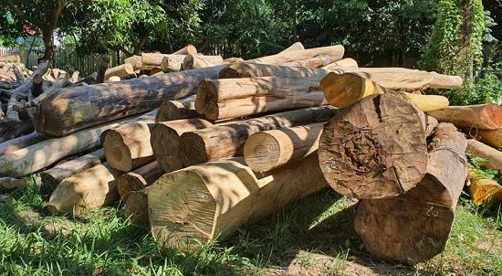 """Vì sao gỗ lậu """"lọt"""" qua trạm kiểm lâm ra khỏi rừng? - Ảnh 1"""