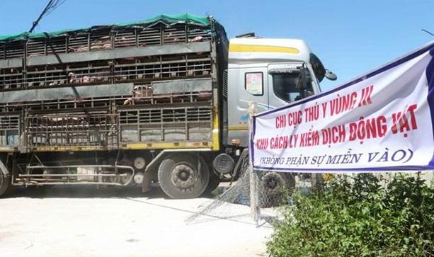 500 con lợn sống đầu tiên nhập khẩu từ Thái Lan đã về đến Việt Nam - Ảnh 1