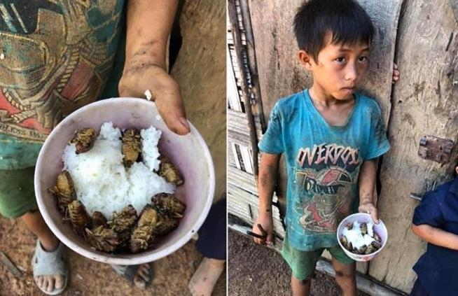 """Vụ 4 đứa trẻ Đắk Lắk ăn cơm nguội với ve sầu: Lãnh đạo huyện nói do """"sở thích"""" - Ảnh 1"""