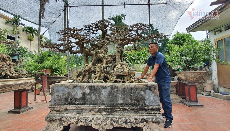 """Siêu cây """"Ngai vàng đất Việt"""" hàng chục tỷ đồng khiến giới chơi cây """"sửng sốt"""" - Ảnh 1"""