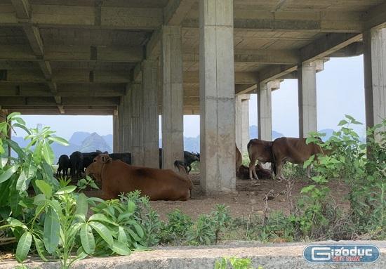 Cận cảnh dự án đại học Hoa Lư hơn 400 tỷ đồng cả thập kỷ vẫn bỏ hoang, thành nơi chăn bò, đổ phế thải - Ảnh 3