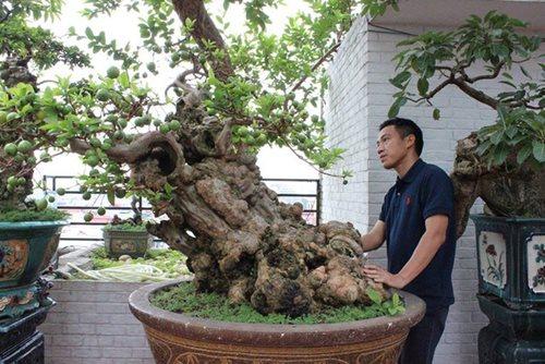 Chiêm ngưỡng cây ổi bonsai tiền tỷ thế độc lạ khiến nhiều người mê mẩn của vị đại gia ngành nhựa - Ảnh 5