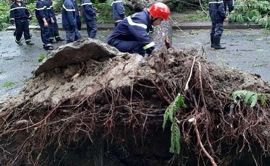 Thừa Thiên - Huế: Chuyên viên phòng GD&ĐT tử vong do cây đổ vì bão số 5 - Ảnh 1