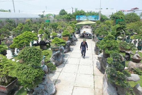 Mục sở thị khu vườn gần 1.000 cây cảnh bonsai hiếm có khó tìm của đại gia Hà thành, giá trị lên đến vài chục tỷ đồng - Ảnh 1
