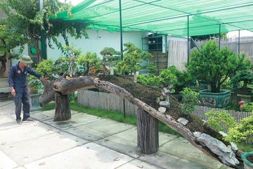 Mục sở thị khu vườn gần 1.000 cây cảnh bonsai hiếm có khó tìm của đại gia Hà thành, giá trị lên đến vài chục tỷ đồng - Ảnh 3