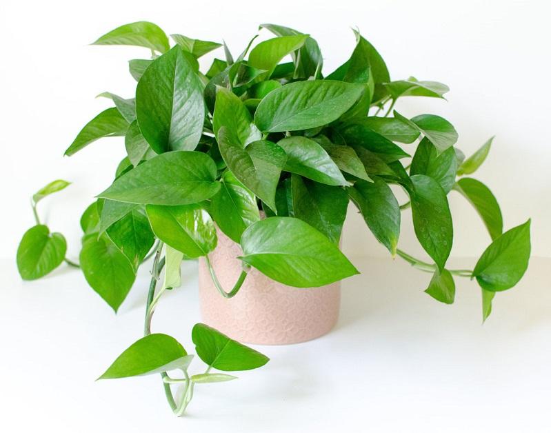 6 loại cây phong thuỷ nên trồng trong phòng ngủ giúp tăng tài vận, vượng khí - Ảnh 1