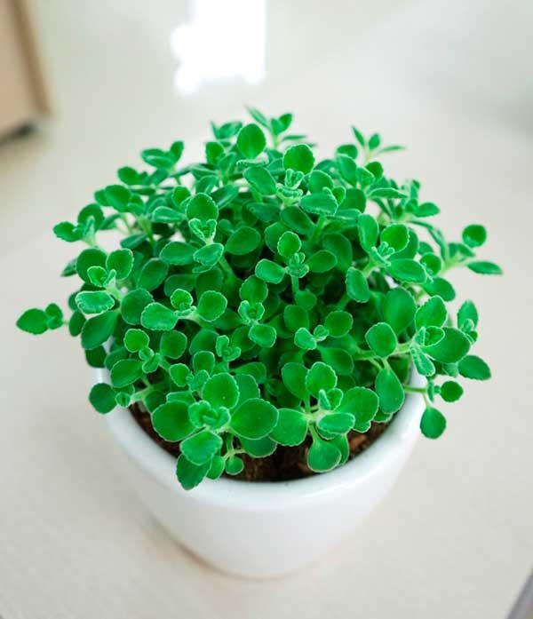 6 loại cây phong thuỷ nên trồng trong phòng ngủ giúp tăng tài vận, vượng khí - Ảnh 3
