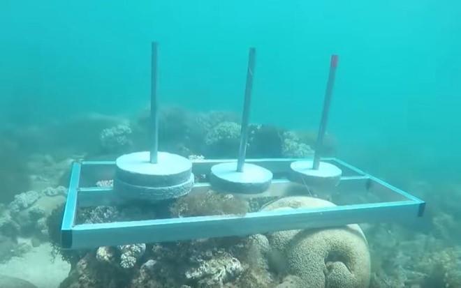 """Bị chỉ trích phá hoại môi trường biển, ban tổ chức """"Cuộc đua kỳ thú"""" lên tiếng - Ảnh 1"""
