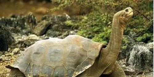 Khó tin với sự tồn tại của những sinh vật khổng lồ nếu chúng không được phát hiện - Ảnh 5