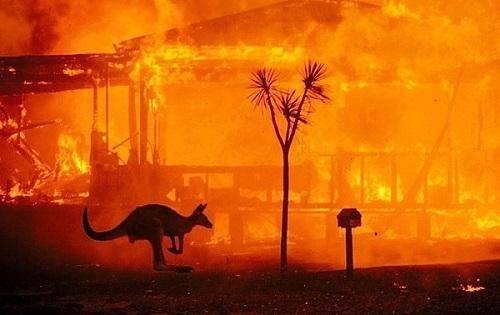 Hơn 180 người bị xử phạt vì các hành vi gây ra cháy rừng ở Australia - Ảnh 3