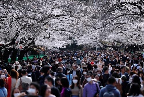 Người Nhật vẫn đổ xô đi đón ngọn lửa Olympic, ngắm hoa anh đào dù chưa hết dịch Covid-19 - Ảnh 5