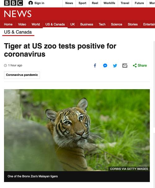 Mỹ: Sở thú New York xác nhận một con hổ cái bị nhiễm Covid-19 - Ảnh 1