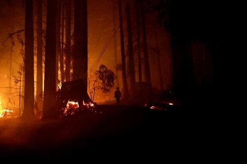 Tổng thống Trump gây tranh cãi khi tuyên bố nguyên nhân dẫn tới cháy rừng - Ảnh 1