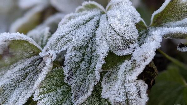 Hình ảnh đỉnh Phia Oắc, Cao Bằng được băng giá phủ trắng trong nền nhiệt -2 độ C - Ảnh 3