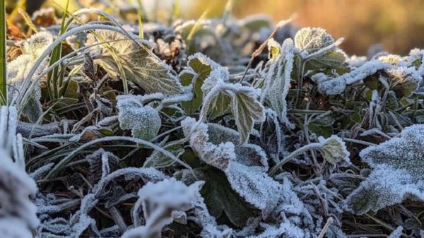 Hình ảnh đỉnh Phia Oắc, Cao Bằng được băng giá phủ trắng trong nền nhiệt -2 độ C - Ảnh 4