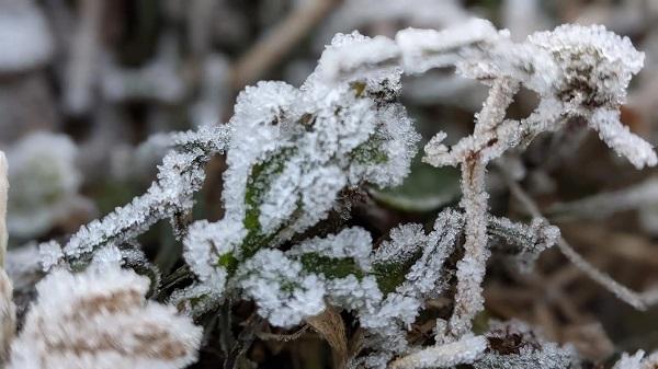 Hình ảnh đỉnh Phia Oắc, Cao Bằng được băng giá phủ trắng trong nền nhiệt -2 độ C - Ảnh 5