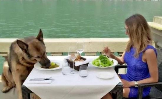 Cận cảnh cuộc sống của chú chó giàu nhất thế giới: Lúc ăn phải có mỹ nữ tháp tùng - Ảnh 3
