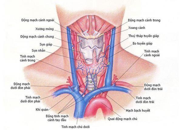 Bác sĩ Dược Sài Gòn chia sẻ một số bệnh lý tuyến giáp thường gặp - Ảnh 1