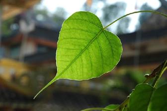 Nước tương Lá Bồ Đề - mang hơi thở truyền thống vào bữa cơm hiện đại của gia đình Việt - Ảnh 3