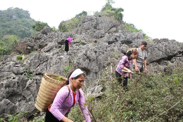 Lương y Nguyễn Thị Nghê: kho thuốc sống của người Mường ở Hòa Bình - Ảnh 1