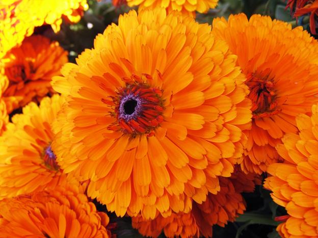 Bảo bối thần kỳ dưỡng da căng mướt chỉ sau 10s- Yếu tố giúp nước thần hoa cúc 2in1 Cỏ Cây Hoa Lá vượt trội hẳn so với các toner thông thường khác - Ảnh 2