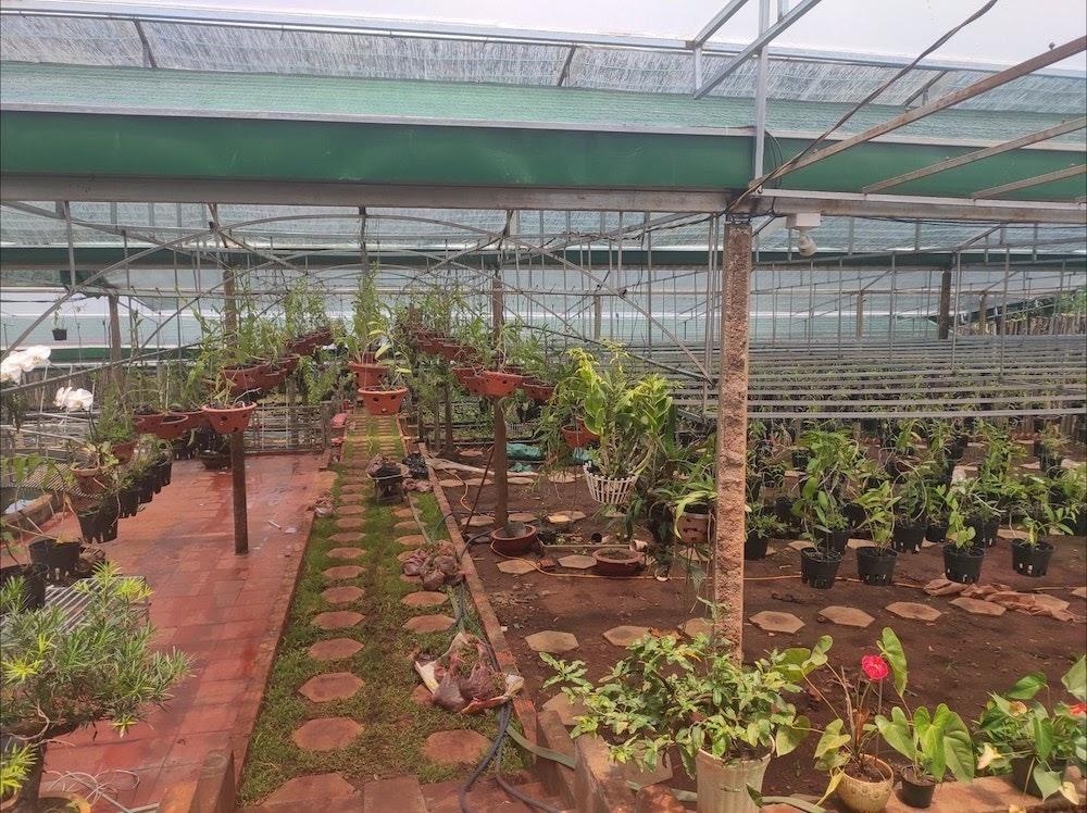 Phía sau nghề trồng hoa lan đầy gian truân của anh Nguyễn Quốc Tư - Ảnh 5